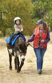 Pony Rides at Cider Days