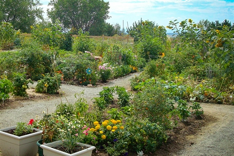 Flourishing flowers and veggies fill out the Ute Park Community Garden.